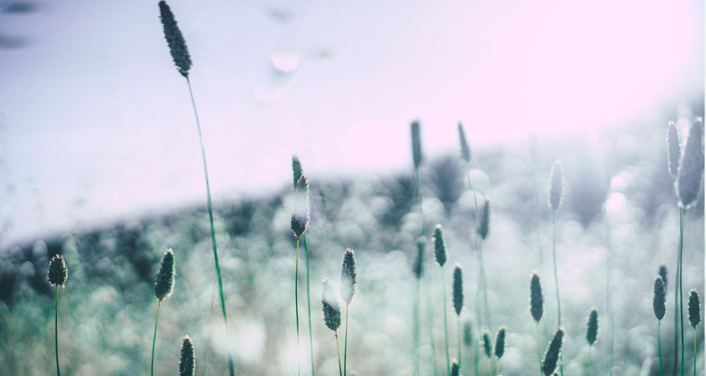 Praktijk Petra Tjeertes - Allergie
